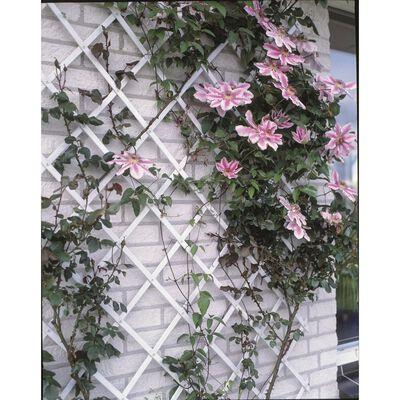 Nature Καφασωτό Κήπου Λευκό 50 x 150 εκ. από PVC 6040701